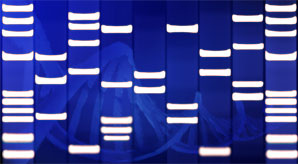 DNA (flickr DNA Art Online)